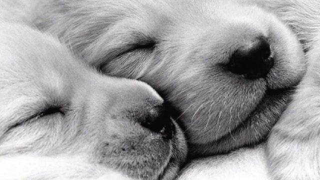 Amico a Quattro Zampe: sapete tutto sul vostro cane?