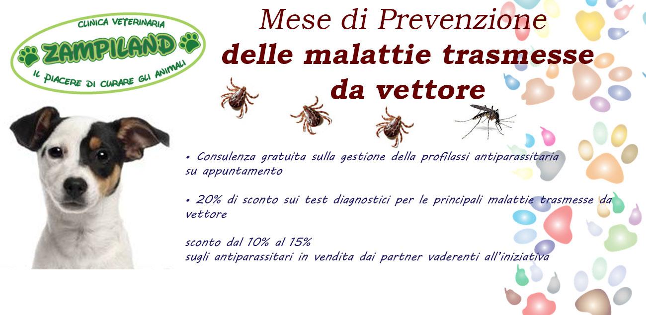 Zampiland - Clinica Veterinaria Messina