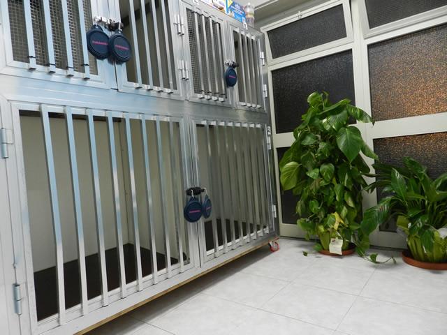clinica-veterinaria-zampiland (6)